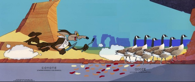 wile-e-coyote-geese
