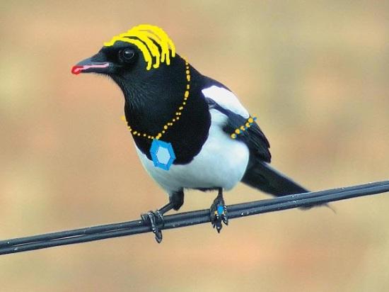 Who's a pretty birdie?